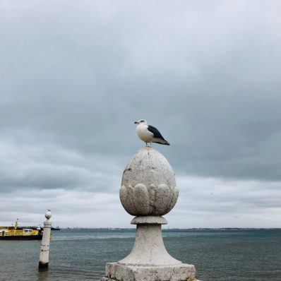Möwe in Lissabon