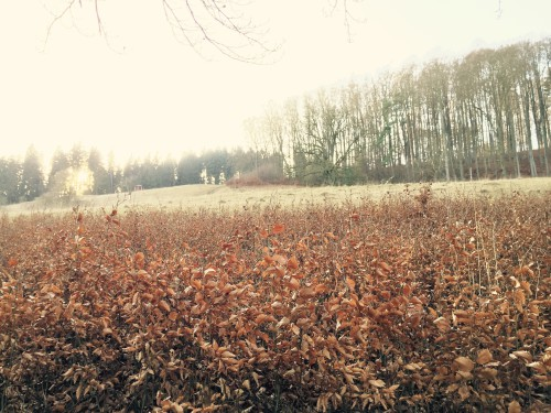 Der dermbacher Wald im Dezember